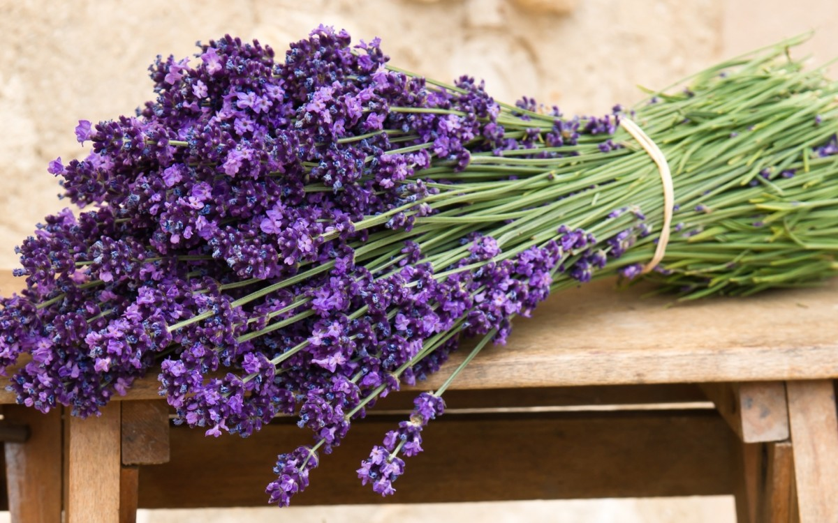Lavender, harvested at the right time and dried correctly, retains its qualities for several years