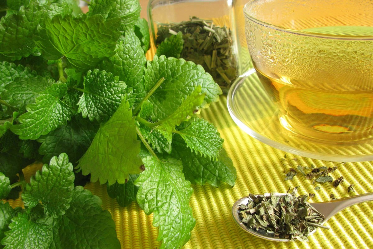 Tea with fennel and lemon balm is recommended for chronic stress