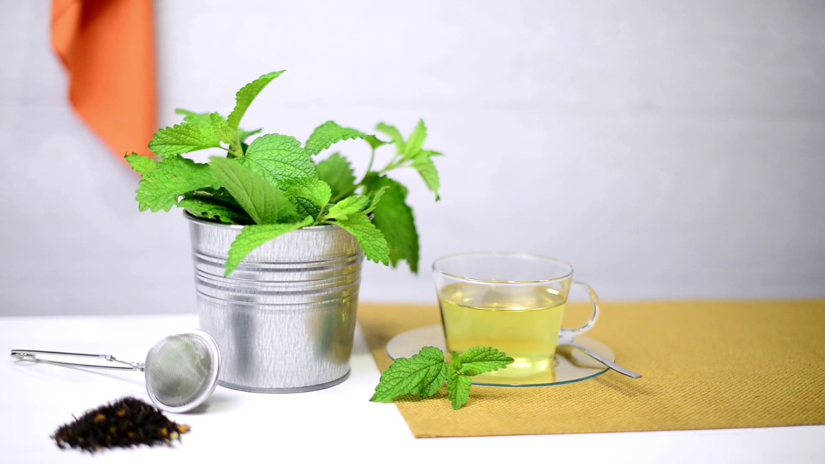 Outwardly, lemon balm is similar to mint