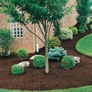 An example of mulching in the garden.