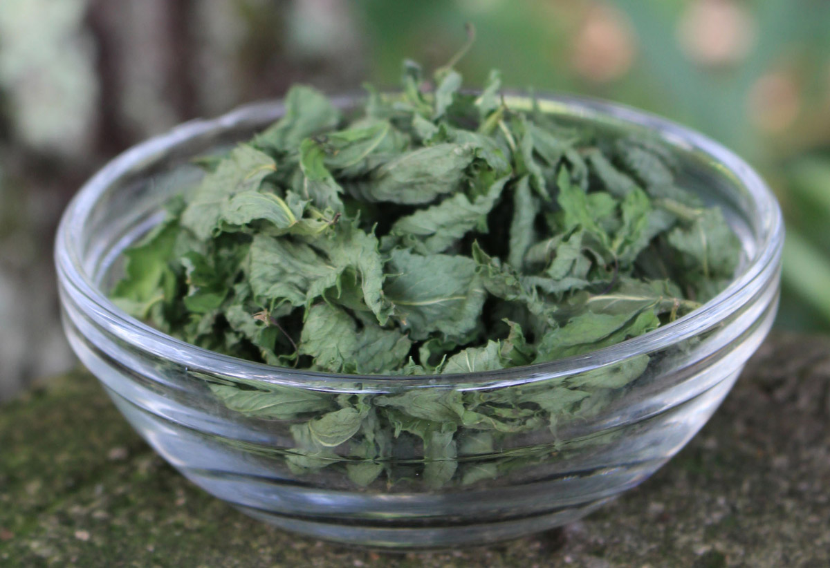 Properly harvested and dried lemon balm