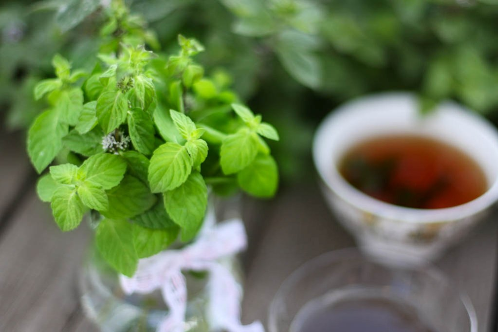 Dry lemon balm is by no means worse than fresh